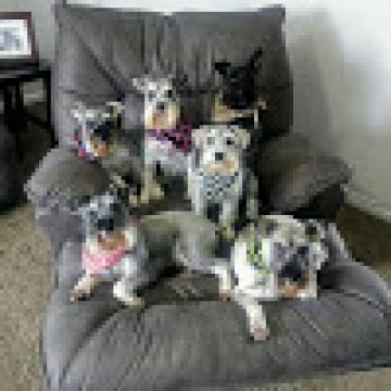 A New Deck | Life With 6 Schnauzers
